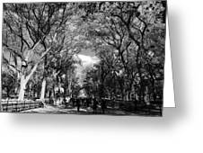 Trees On The Mall In Central Park In Black And White Greeting Card