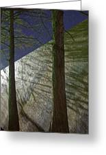 Trees Sky Shadow Greeting Card