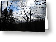 Trees Tell Stories Greeting Card