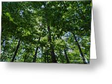 Trees To Heaven Greeting Card