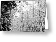Trees Under The Snow Greeting Card