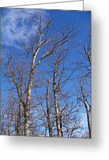 Trees With Cotton Cloud Greeting Card