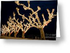 Trees With Lights Greeting Card
