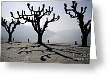 Trees With Shadows Greeting Card