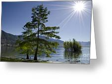 Trees With Sunbeam Greeting Card