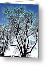 Treescapade Greeting Card