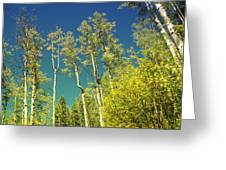 Treetop Color Greeting Card