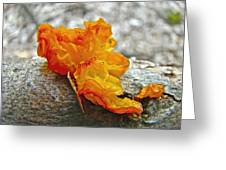 Tremella Mesenterica - Orange Brain Fungus Greeting Card