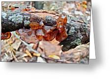 Tremella Mesenterica - Reddish Brown Brain Fungus Greeting Card