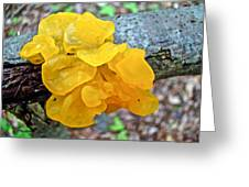 Tremella Mesenterica - Yellow Brain Fungus Greeting Card