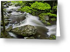 Tremont Spring In Great Smoky Mountains Greeting Card