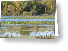 Tri-ply Swamp Greeting Card
