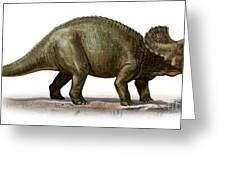 Triceratops Prorsus, A Prehistoric Era Greeting Card