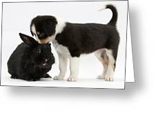 Tricolor Border Collie Pup With Black Greeting Card