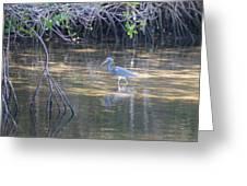 Tricolored Heron 1 Greeting Card