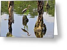 Tricolored Reflection Greeting Card