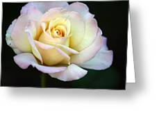 Trilogy Of A Rose- Day Two Greeting Card