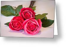 Trio Of Pink Roses Greeting Card