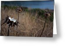 Trio Of Thistles Greeting Card