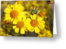 Triple Beauty Greeting Card