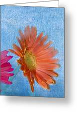 Triptych Gerbera Daisies-three Greeting Card