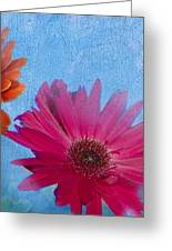 Triptych Gerbera Daisies-two Greeting Card