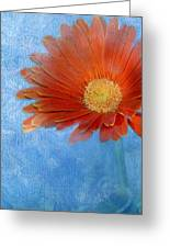 Triptych Gerbera Daisy-one Greeting Card