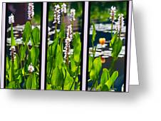 Triptych Of Water Hyacinth Greeting Card