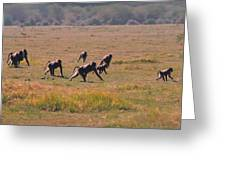 Troop Of Baboons  Greeting Card
