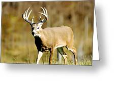 Trophy Buck Greeting Card