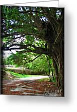 Tropical Banyan Path Greeting Card