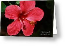 Tropical Beauty Of Florida Greeting Card
