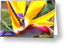 Tropical Bird Of Paradise Greeting Card