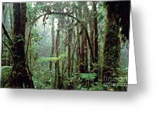 Tropical Cloud Forest Greeting Card