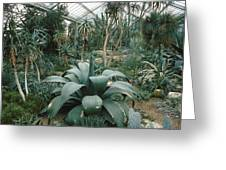 Tropical Conservatory, Kew Gardens Greeting Card