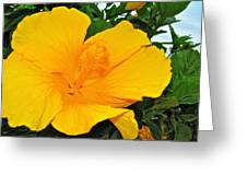 Tropical Delight Greeting Card