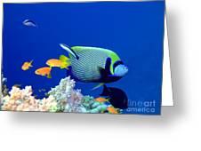 Tropical Fish Angelfish  Greeting Card