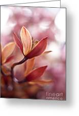 Tropical Grace Greeting Card