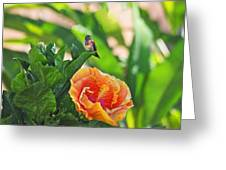 Tropical Hummer Greeting Card