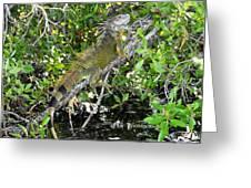 Tropical Iguana Greeting Card