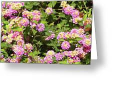 Tropical Lantana Greeting Card