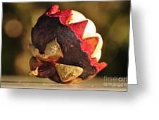 Tropical Mangosteen - The Medicinal Fruit Greeting Card by Kaye Menner