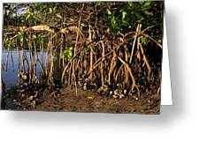 Tropical Mangroves Greeting Card