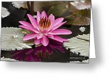 Tropical Night Flowering Water Lily  Rose De Noche IIi Greeting Card