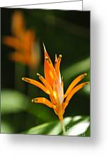 Tropical Orange Heliconia Flower Greeting Card