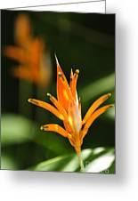 Tropical Orange Heliconia Flower Greeting Card by Elena Elisseeva