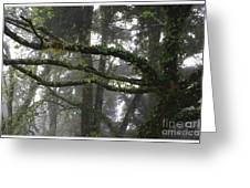 Tropical Rain Forest Greeting Card