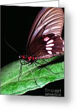 Tropical Rainforest Butterfly Greeting Card