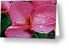 Tropical Rose Greeting Card by Susan Herber