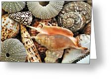 Tropical Shells Greeting Card